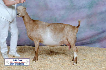 Dam: CH Little Orchard TF Jasmine